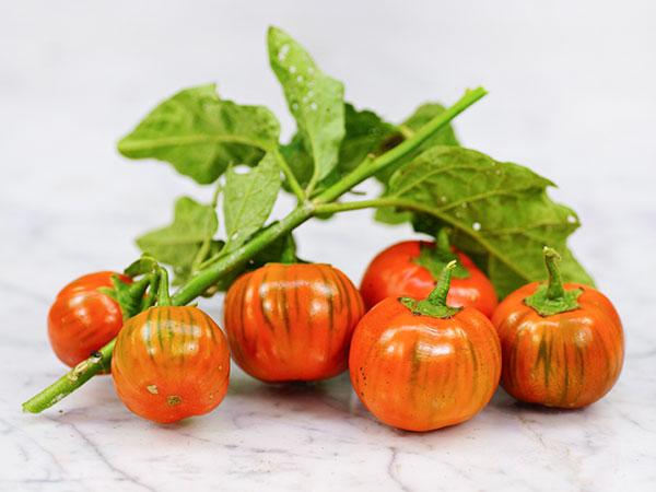 Eggplant-Melanzane-Rosso-EG99-DSC06699
