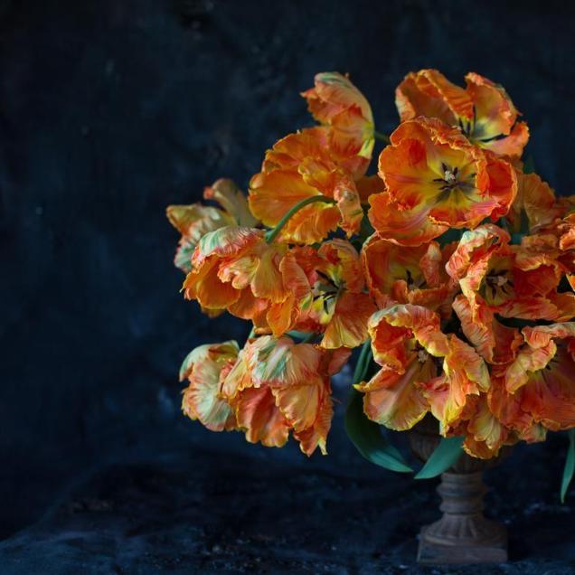 Floret_Blog_Tulips-15_768x